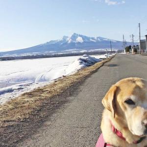 今日の斜里岳 冬の終りの斜里岳が美しい 2021年3月23日