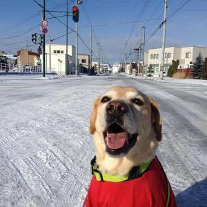 笑う犬 カーシャの笑顔を集めてみました