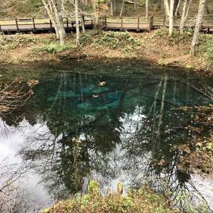 秋の神の子池 摩周湖の脇にある神秘の青い池 (神の子池を1周する動画付)