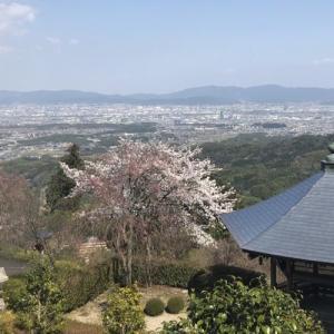 京都 善峯寺 -桂昌院ゆかりの枝垂桜と遊龍の松-