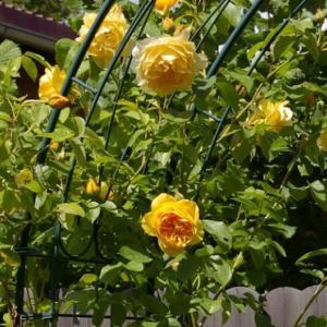 【薔薇】オベリスク スリムを実際に使用したレビュー
