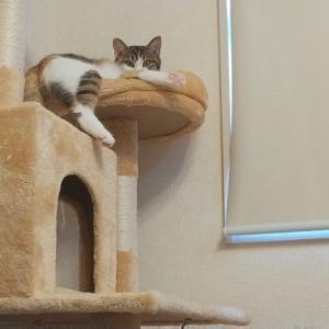 猫の聴覚は人の倍以上!?