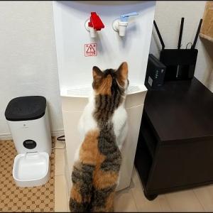 我が家の猫は右利き?それとも左利き?