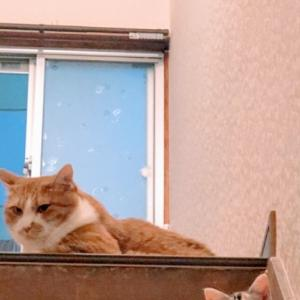 市役所から保護猫を引き取って2週間
