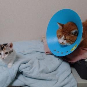 仲良しになりつつある?先住猫と保護猫