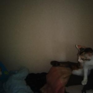先住猫、定位置を奪われるの巻