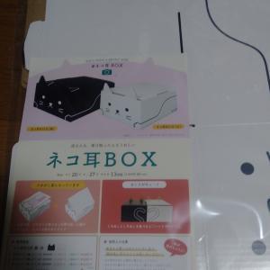 猫耳BOX、到着そうそう耳を噛じられるの巻