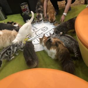 猫カフェで浮気