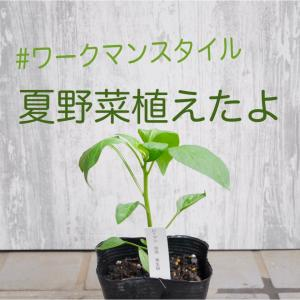 ワークマンスタイルで夏野菜を植えました(^^)