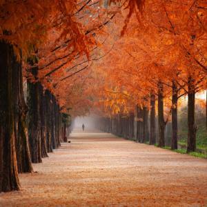 すっきり秋…