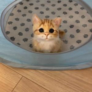 見つめる仔猫ちゃん ヤフオク出品中です(⌒▽⌒)