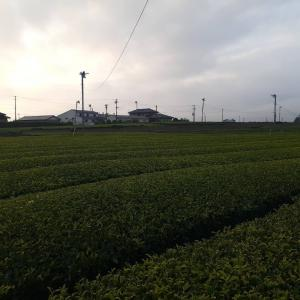 高知県 室戸市 シットロト踊り