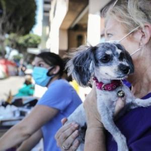犬2匹がコロナ検査で国内初の陽性、感染した飼い主から預かる