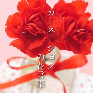 地車囃子 神龍   色で変わる「カーネーション」の花言葉