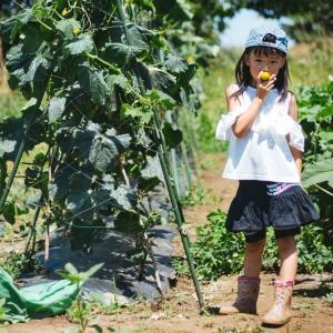 シェア畑とは?手軽にできる最強の家庭菜園をご紹介