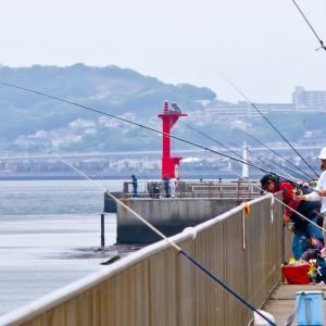 サビキ釣りで爆釣するコツと裏技
