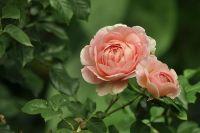 母の日に子どもからカーネーションが届く ステップ母初めての花束