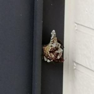 蜂の巣発見!!