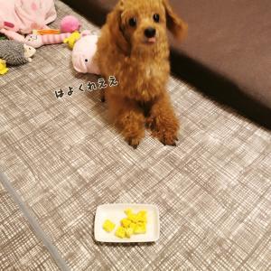 犬おやつに3分で作れる米粉蒸しパン