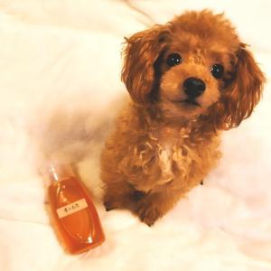愛犬にもハチミツは最高の栄養剤