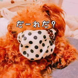 母親が作った犬用のマスク