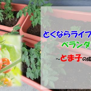 ベランダ家庭菜園はじめました