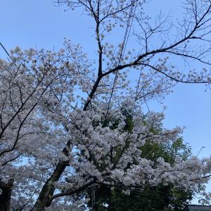 桜を見ると思い出すあの日々