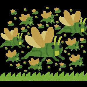 【蝗害】 #バッタ の大群がラオスから #中国 に侵入 9月にかけて「蝗害」大爆発も 竹やイネなどの植物を食べ尽くす「黄脊竹蝗」という