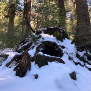冬の縄文杉登山にチャレンジした結果...