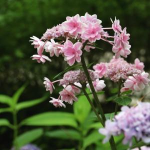 花と猫とい草と思い出白書
