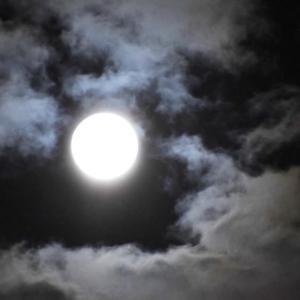 綺麗なお月様でした。