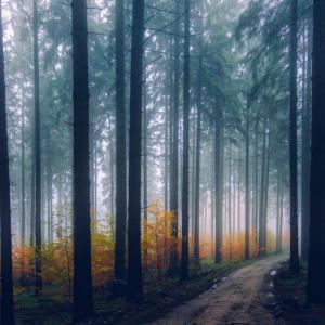 目に見える悲しい景色が美しく変わる時~統合すれば必ず変わる