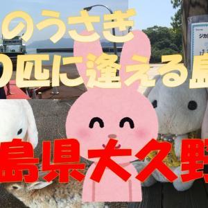 無料でウサギとふれあい遊ぶカフェ!島全体が動物園、野生のウサギ900匹!大久野島