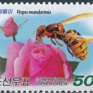 医学徒然草-54.ハチ毒アレルギーとは?-