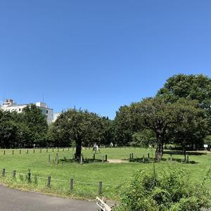 【中目黒公園】お花見・レジャー・ピクニックに最適な都会のオアシス!駅徒歩10分!