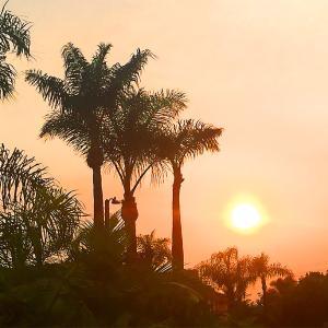 カリフォルニア州各地で大規模な山火事。舞い降りる灰と心配されるエアクオリティ。