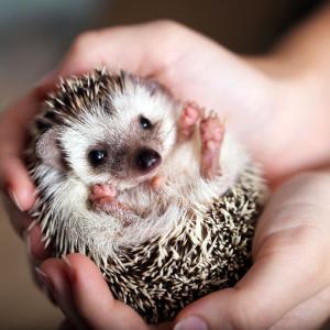 日本で人気のあのペットがLAでは飼えない! 意外と知らないカリフォルニアの違法ペット。