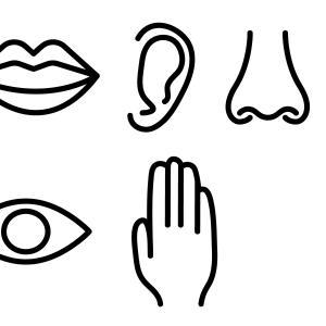 感覚過敏は「感覚器が優れている」から起こるのか
