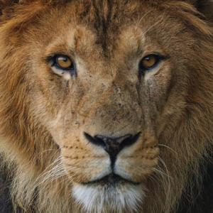 ゼロサムゲームは超弱肉強食 あなたはライオンに勝てますか?