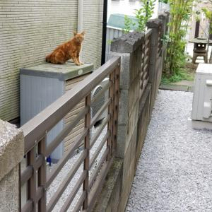 隣の敷地にニャン太郎(^-^;