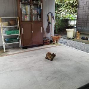 今朝のニャン太郎とキーちゃん(^_^)/