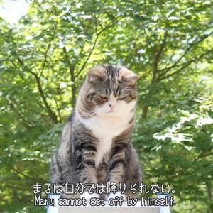 【ダイエット】竹脇まりなさんの「痩せるダンス」動画を続けていたらお腹に筋が出来てきた!!【歓喜】