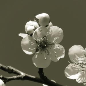 この花が咲いたら