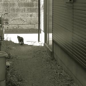 ネコちゃんがご案内