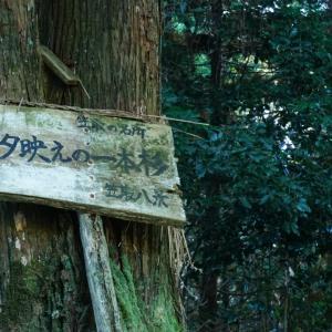 笠取の名所「夕映えの一本杉」