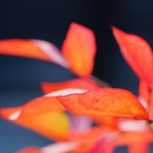 ちっさな庭も紅葉したよ