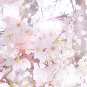 桜見た&面接落ちた