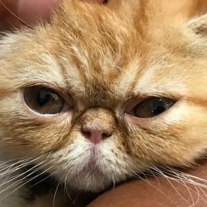 初めての爪切り。おんなの駅とライカム。エキゾチックな猫。