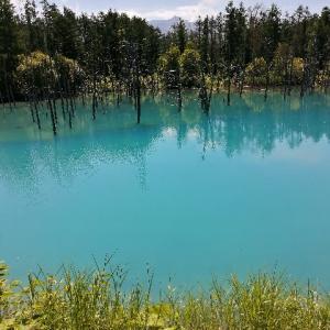 神秘!!青い池~白ひげの滝