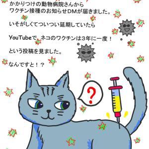 ニャンコさんのワクチンは3年に一度がいいってホント?